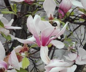 La Magnolia Appartamento
