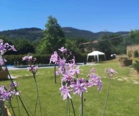 Alba Morus Bed e Breakfast sentiti a casa nel cuore della Toscana